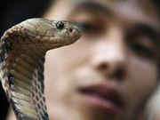 越南眼镜蛇主题餐厅(组图)